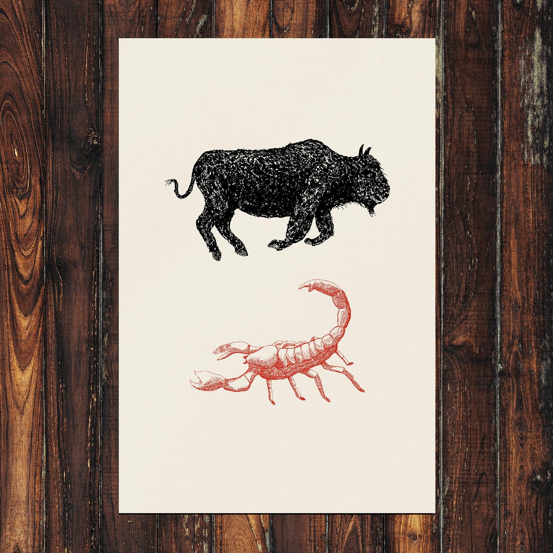 Bison & Scorpion Print 24x36