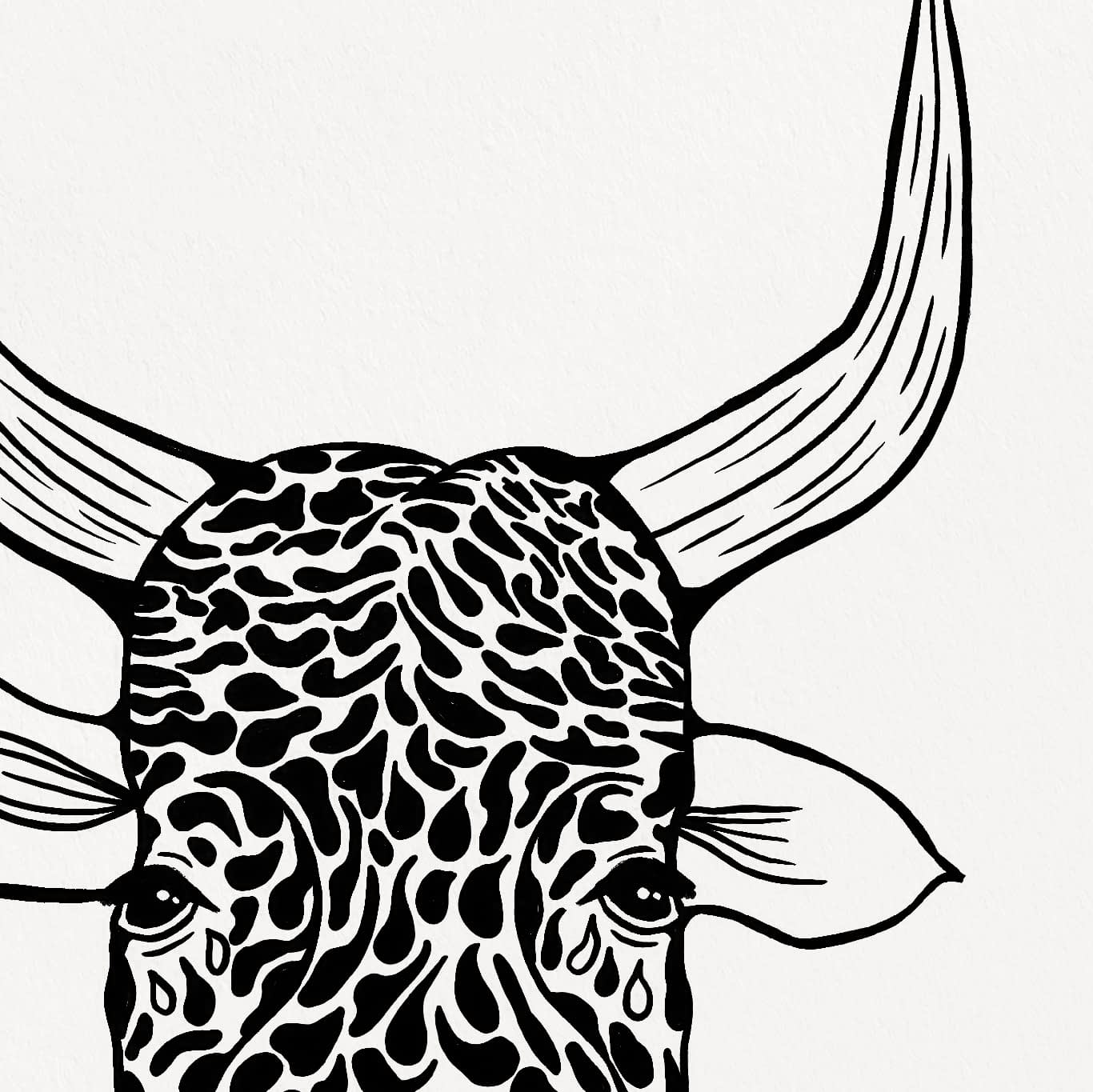 Cow with Tears Print Zoomed