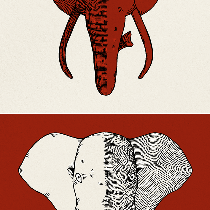 Elephant Print Zoomed